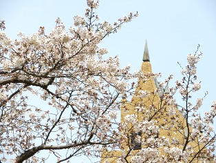 キャンパス内で開花したソメイヨシノ(1)