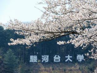 キャンパス内で開花したソメイヨシノ(2)